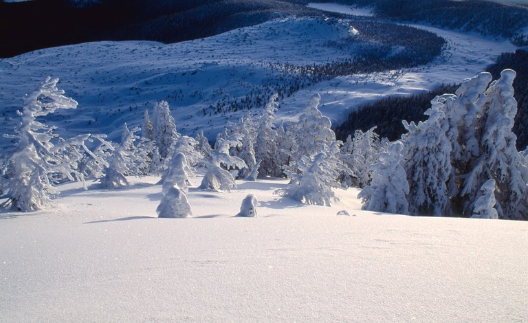 Deschutes National Forest   Public Domain/Pixabay