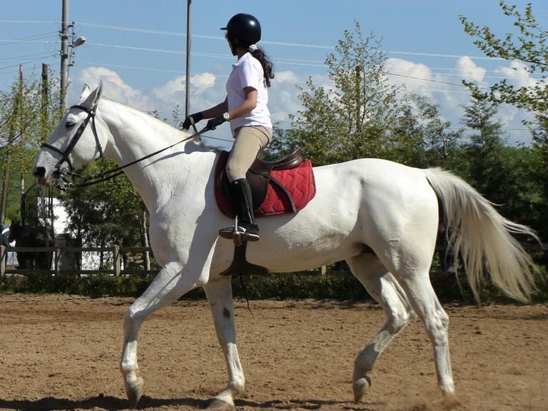 Competitive horseback riding, courtesy of WikiCommons