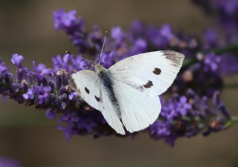 El Segundo Butterfly Preserve