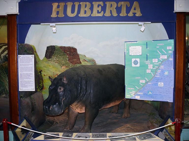 Huberta the Hippo display at Amathole Museum © Morné van Rooyen/WikiCommons