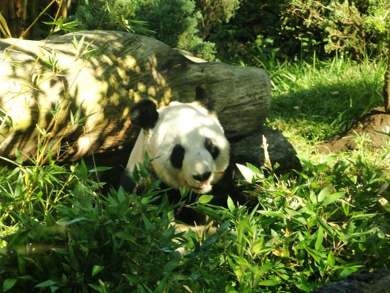 Chapultepec Zoo | © Robinson Esparza/Flickr