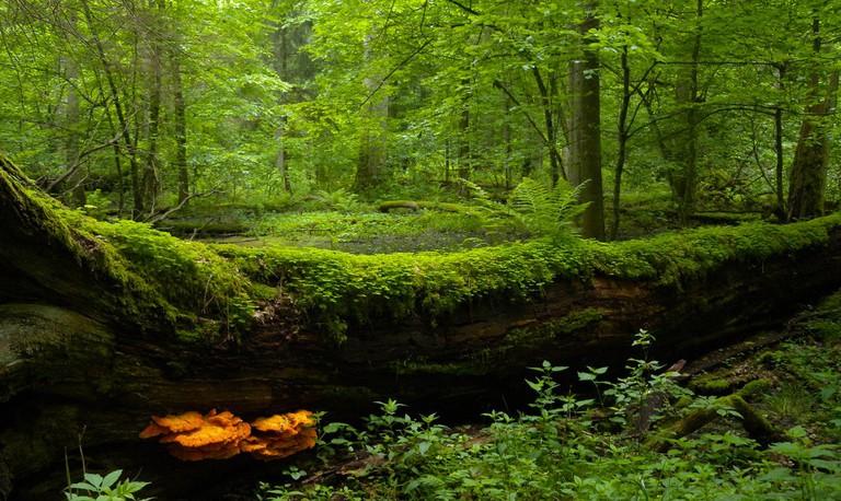 Białowieża National Park |© Frank Vassen / FLickr