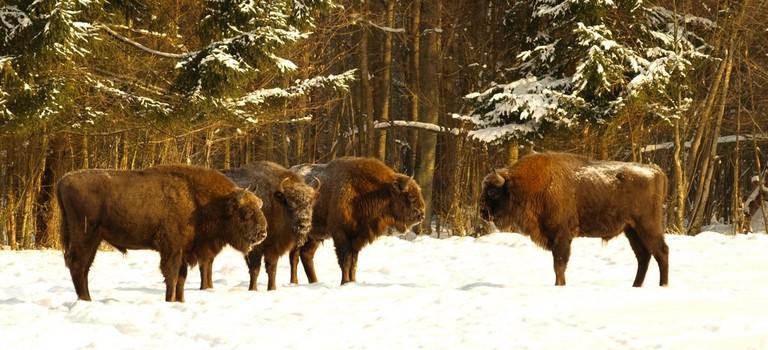 Białowieża National Park © Francesco Carrani / Flickr