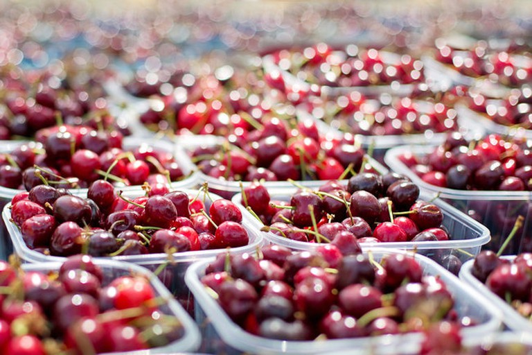 Where to Pick the Best Fruit in South Africa