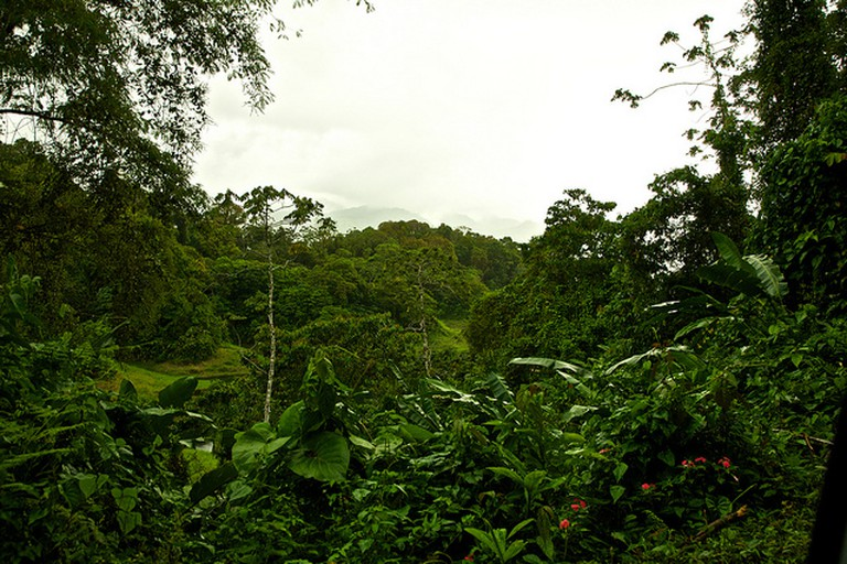 Rain Forest, Costa Rica | © Vytautas Šėrys/Flickr