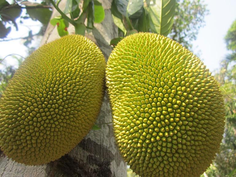 The jack fruit, a native fruit to Rio de Janeiro