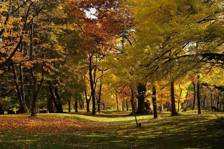 At Hokkaido University Botanical Gardens in Sapporo, Hokkaido prefecture, Japan.   ©663highland / Wikimedia Commons