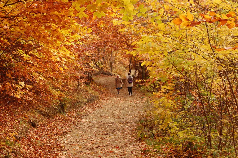 The woods in Autumn | © Cha già José / Flickr