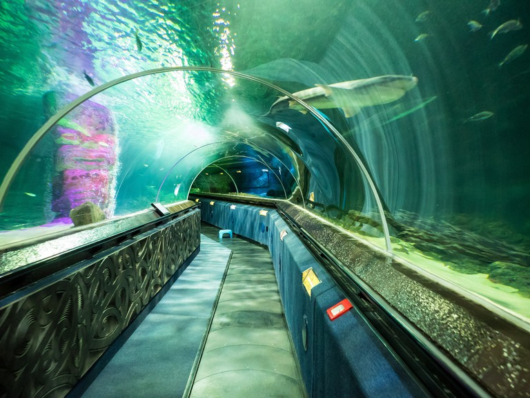 Shark Tunnel at Kelly Tarlton's Sea Life Aquarium