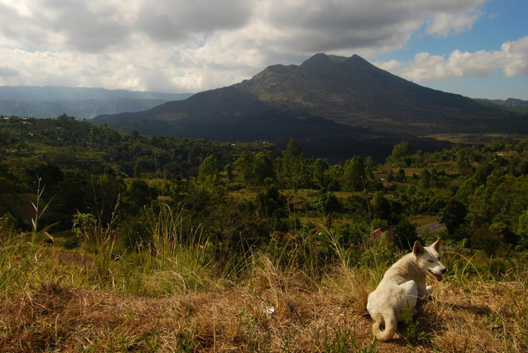 Kintamani dog of Bali | © William Cho / Flickr