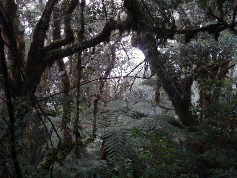 Forest in Amboro | © Ángel M. Felicísimo/Flickr