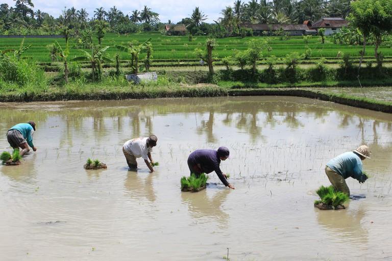 Farmers in Bali | © John Y. Can / Flickr