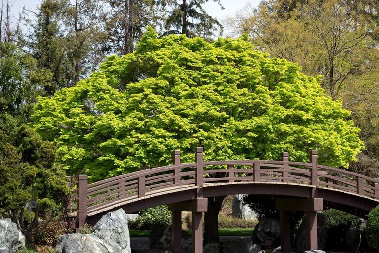 Japanese Friendship Garden | © Anna Fox/Flickr