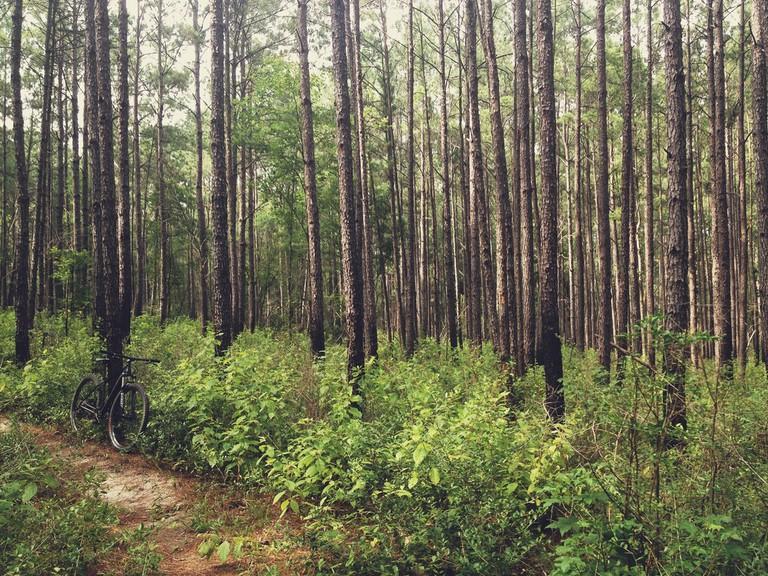 Sam Houston National Forest © Bobby Ketchum