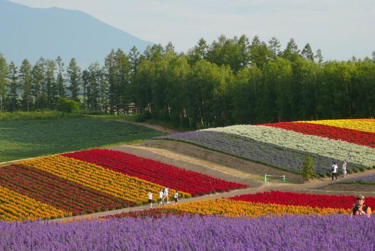 Panoramic gardens Shikisai no Oka in Biei town in Hokkaidō, Japan.   ©yoppy / Wikimedia Commons