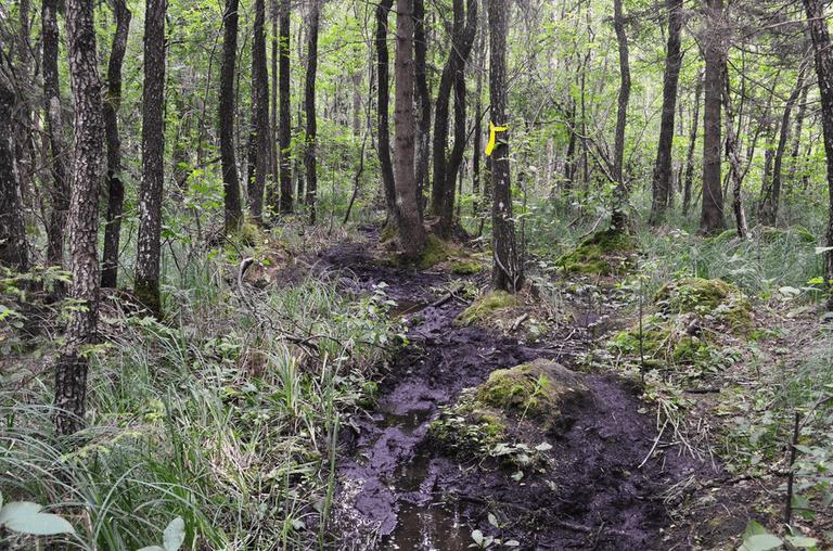 Kulgrinda Path ©Šarūnas Šimkus/Wikimedia Commons