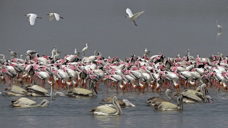 Flamingos flock at Pulicat Lake | © A N Suresh Kumar/Flickr