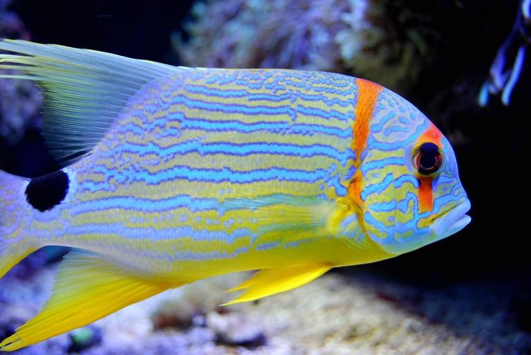 Aquarium at the Oceanographic Museum | © Aanjhan Ranganathan / Flickr