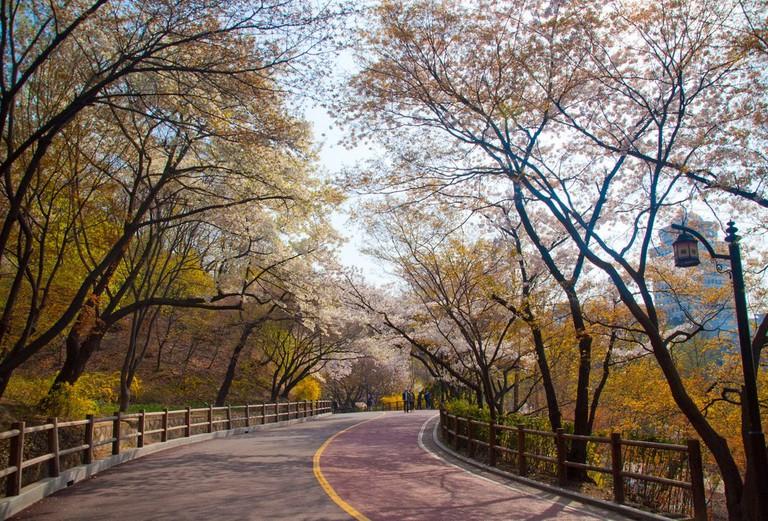 Namsan Park in fall   © Jordi Sanchez Teruel / Flickr