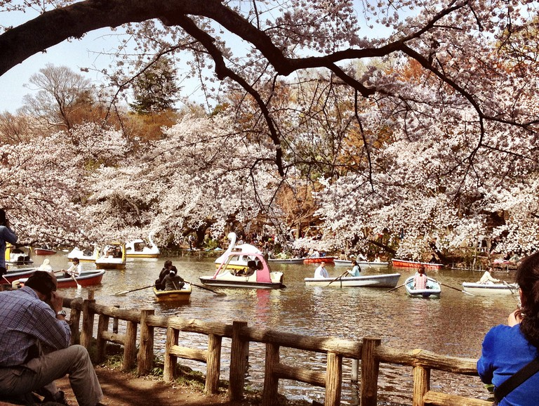 Inokashira Park is one of the main attractions of Kichijoji | © Karl Baron/Flickr