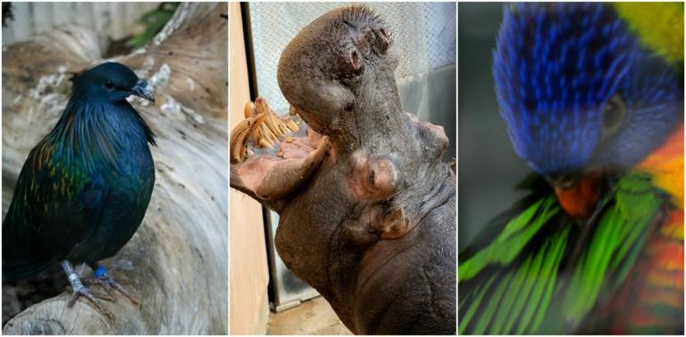 Zoological Gardens | © Gabriella Szekely / Flickr