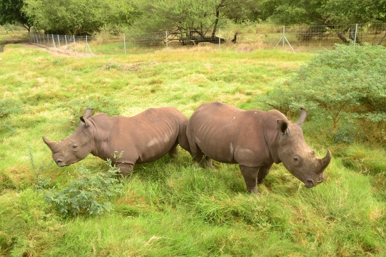 White Rhinos|© Courtesy of Mauripix