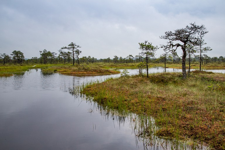 Korvemaa National Park| © Katiekk/Shutterstock