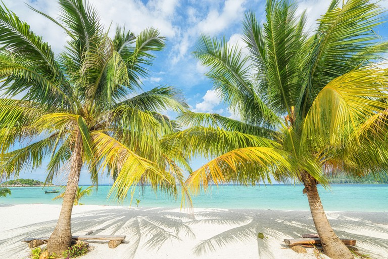 Two palms on the tropical beach | © upslim/Shutterstock