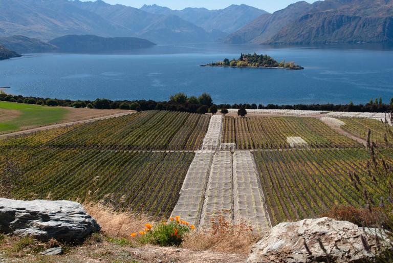 View of Rippon Vineyard and Lake Wanaka | © Jocelyn Kinghorn/Flickr