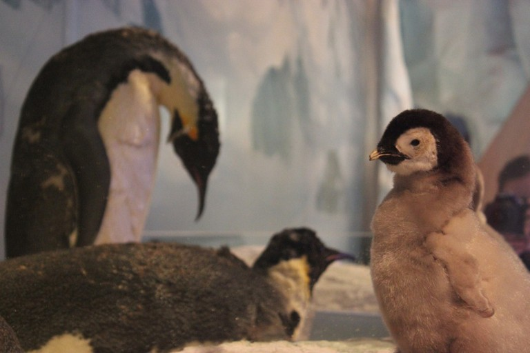 Taxidermied Emperor Penguins at the International Antarctic Centre | © _somaholiday/Flickr