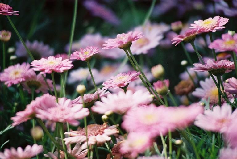 Year Round Colour, Duthie Park | © Alan Porter/Flickr