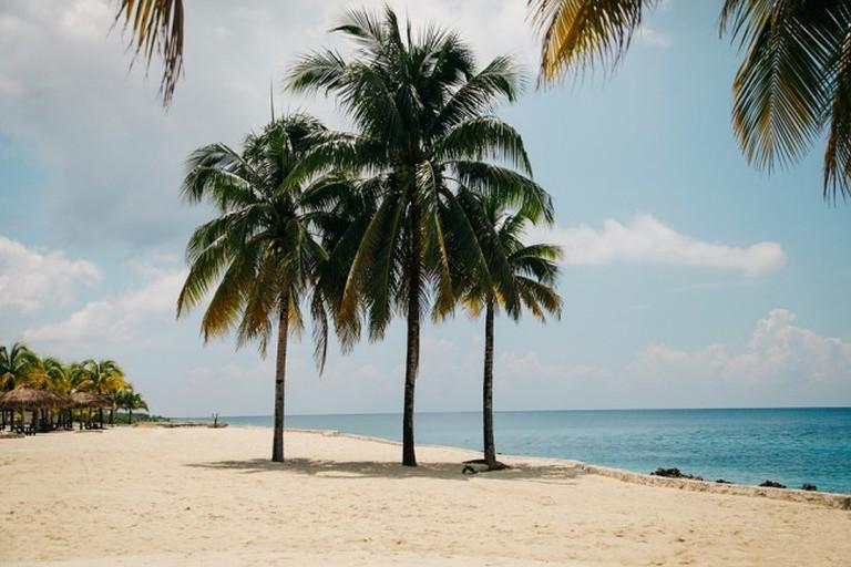 Tropical Trees|© Pexels/PixaBay