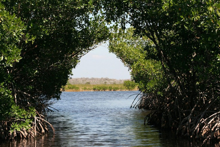 Mangrove Forest / © TanjaC / Pixabay