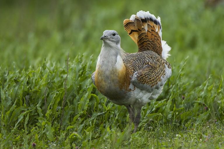 Hortobagy National Park wildlife