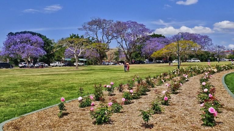 Jacarandas in New Farm Park | © Tatters /Flickr