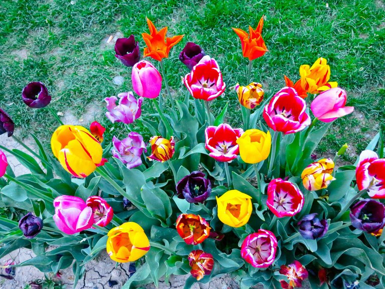 The Iranian Gardens drown in tulips in the spring | © Ninara / Flickr