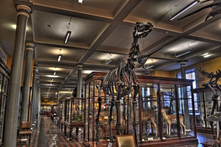 Natural History Museum, Dublin, Ireland   © Miguel Mendez/Flickr