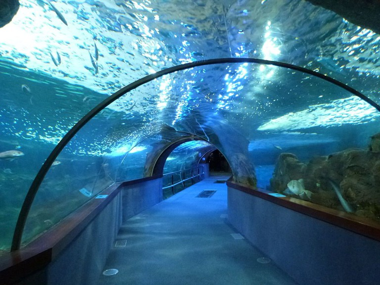 Aquarium Donostia   ©Catatine / Wikimedia Commons