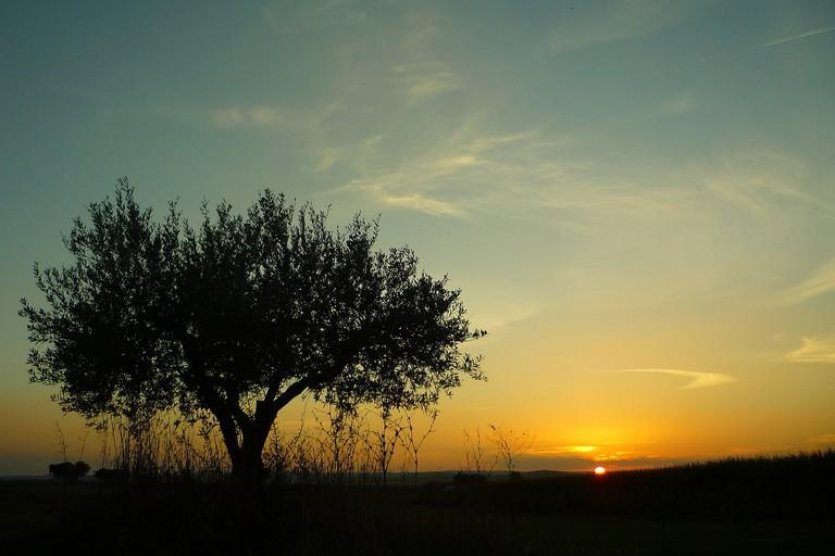 The sun sets over cork trees in Alentejo CC0 Pixabay