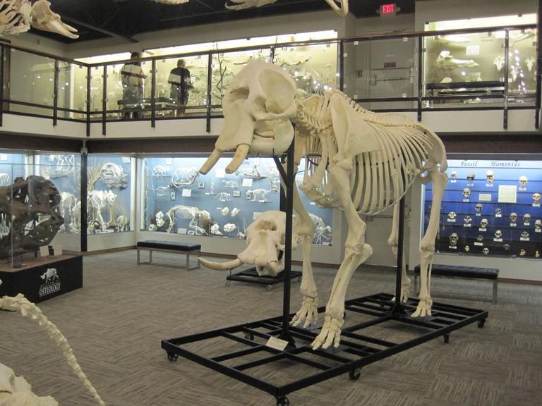 Skeleton Museum of Osteology™