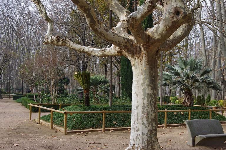 Devesa Park, Girona | ©Crispica / Wikimedia Commons