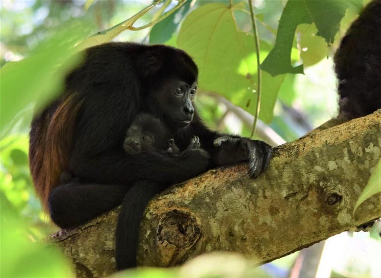 © Deb Campbell/Courtesy of Sibu Sanctuary