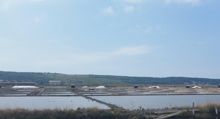 Salt Fields