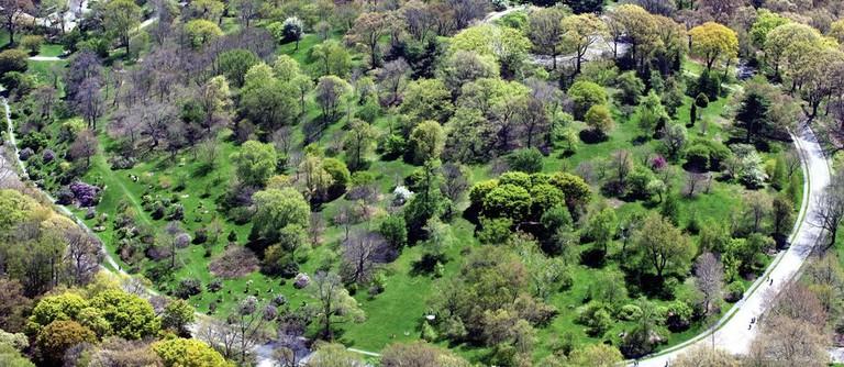 Courtesy of Arnold Arboretum
