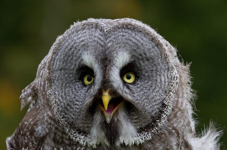 Scottish Owl Centre | © Andy Morffew/Flickr