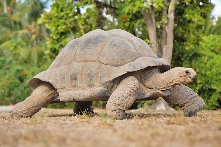 Fascinating things to know about Seychelles - the worlds biggest tortoise
