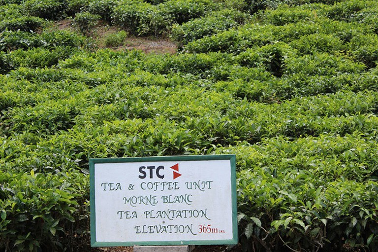 20 unmissable attractions in Seychelles - a trip to the tea plantation