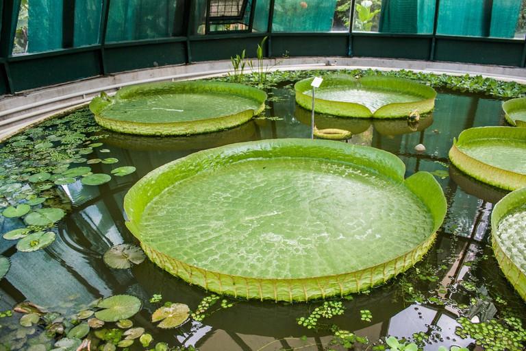 Botanical Garden   © Shadowgate/Flickr