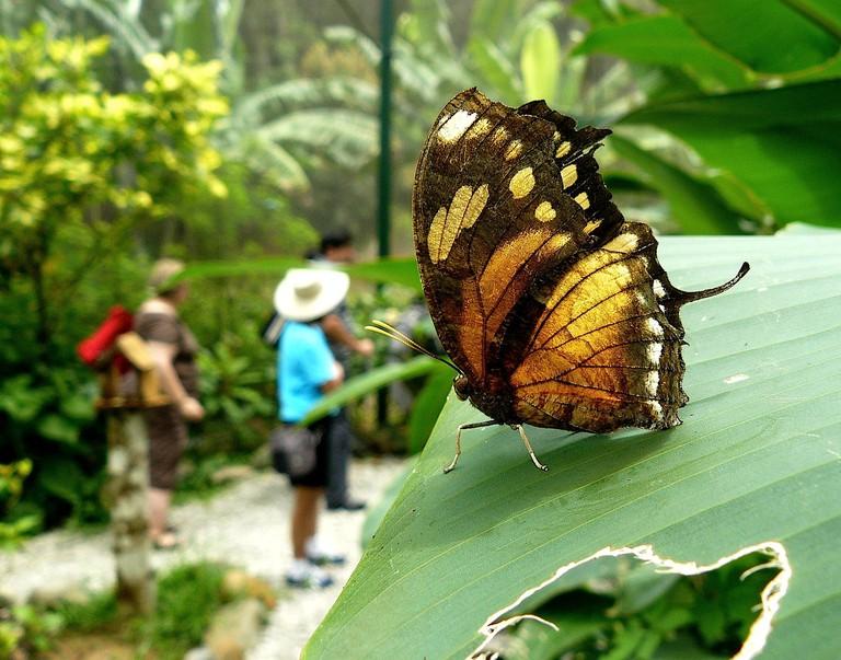 A butterfly at Gamboa Rainforest Resort, Panama