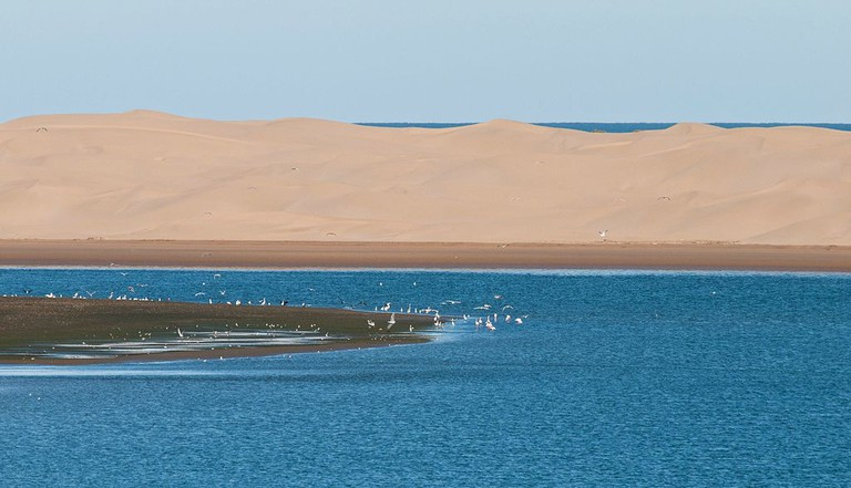 Birds in the water at Khenifiss National Park